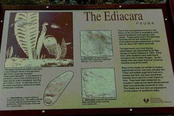 Ediacara explanation