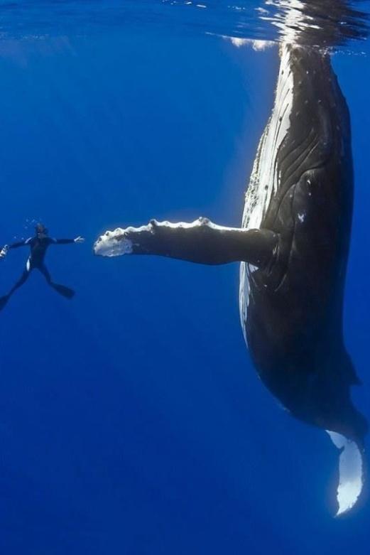 Handshake between species